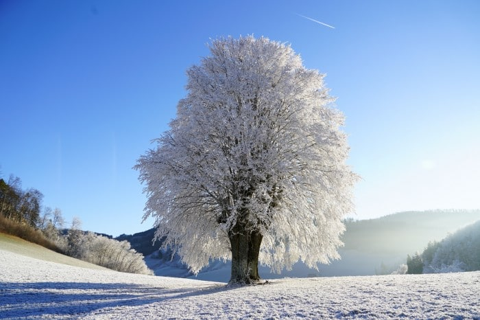 massif des Vosges - Grand est
