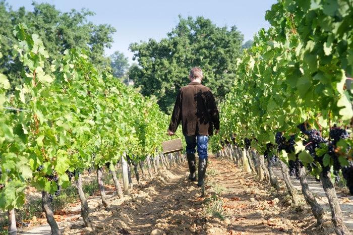vignobles de la Loire